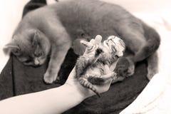 Newly born kitten Stock Photo