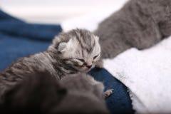 Newly born kitten Stock Image