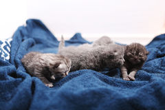Newly born kittens royalty free stock images