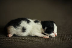 Newly born little kitten stock images