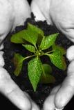 Newly born plant Royalty Free Stock Photography