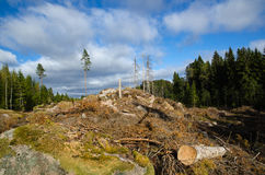 Newly clear cut forest area Stock Image
