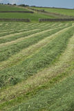 Newly cut grass Royalty Free Stock Photography