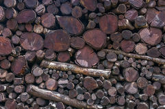 Newly felled timber. stack of wood. Stock Photos