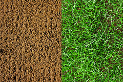 Newly grown grass newly prepared soil Royalty Free Stock Image