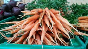 Newly harvest carrots. On plastic crate for sale Royalty Free Stock Photography