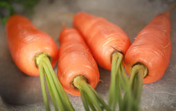 Newly harvested carrots. Closeup of some newly harvested carrots Royalty Free Stock Photography