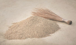 Newly harvested paddy seeds Stock Photography