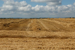 Newly harvested wheat field. Against a cloudy sky stock photo