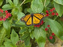 Butterfly closeup on bright green leaves with small red flowers. royalty free stock photography