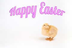 Newly hatched chick on white with Happy Easter title Stock Photography