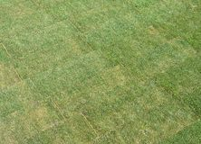 Newly laid lawn. Showing rolled out turf sections royalty free stock images
