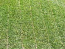 Newly laid lawn. Showing rolled out turf sections royalty free stock photos