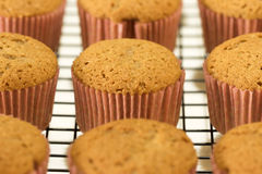Newly made cinnamon cupcakes in a cooling rack Royalty Free Stock Image