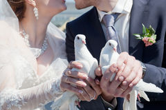 Newly-married couple. Two white pigeons in hands at the newly-married couple Royalty Free Stock Images