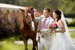 Newly married couple. Stand with beautiful big horse on nature, focus on horse Royalty Free Stock Image
