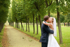 The newly married couple. Kissing at alley in park Stock Image