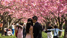 Newly married couple at the brooklyn botanical garden Royalty Free Stock Image