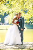 Newly married couple embracing at river under big tree Royalty Free Stock Photo