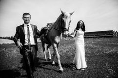 Newly married couple holding horse rein and walking at meadow Stock Image
