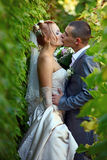 Newly-married couple kisses in a vineyard. Close-up Stock Images