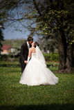 Newly married couple kissing on grass under big tree Royalty Free Stock Image