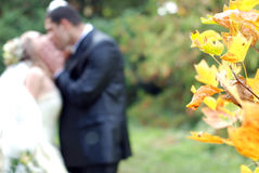 The newly married couple and nature Royalty Free Stock Images