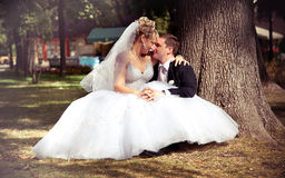 Newly married couple sitting at park under tree Stock Photography