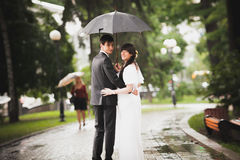 Newly married couple walking in park under rain Royalty Free Stock Image