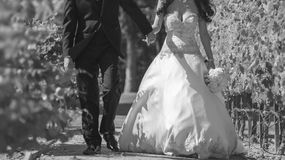 Newly married wed couple. Newly wed married couple walking through a vineyard Royalty Free Stock Photo