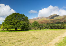 Newly mown hay in Buttermere Lake District Royalty Free Stock Photography