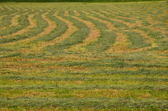 Newly Mown Hay Field Royalty Free Stock Images