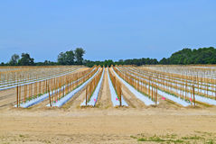 Newly planted field of crops in New Jersey. Newly plowed and planted field of crops in southern New Jersey Stock Images