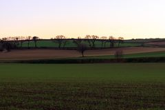 The newly planted fields begin to see corn grow at sunset.  stock photos
