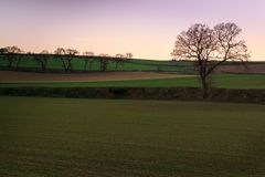 The newly planted fields begin to see corn grow at sunset.  royalty free stock images