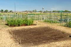 Newly Planted Garden. A newly planted garden in an organic community gardening plot for city dwellers Royalty Free Stock Images