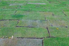 Newly planted grass field blocks. At thailand royalty free stock photography