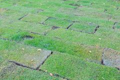 Newly planted grass field blocks. At thailand stock photo