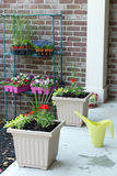 Newly planted spring flowers in flowerpots Royalty Free Stock Photos