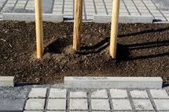 Newly planted trees Stock Image