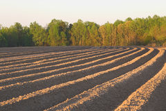 Newly ploughed field Stock Photography
