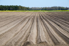 Newly ploughed rows Stock Photography
