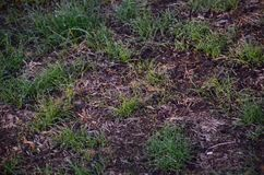 Newly seeded lawn Stock Photo
