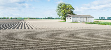 Newly seeded potatoes in ridges Stock Photo