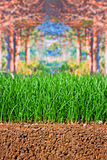 Newly sown grass seed showing roots in the soil Royalty Free Stock Image