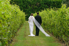Newly wed couple. A newly wed couple walking through a vineyard Royalty Free Stock Images