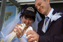 Newly wedded couple with doves. Newly wedded couple playing with doves Royalty Free Stock Images