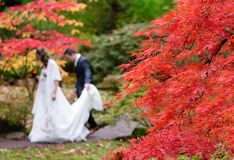 Newlywed couple walking in park Stock Photography