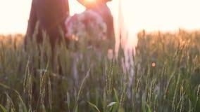 Newlyweds που αγκαλιάζει σε έναν τομέα σίτου στην ηλιόλουστη ημέρα φιλμ μικρού μήκους
