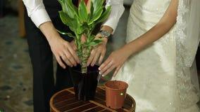 Newlyweds που φυτεύει Flovers απόθεμα βίντεο